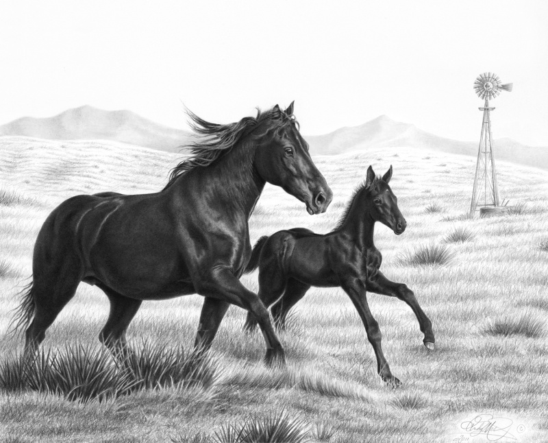 Carefree Canter, pencil art by Andy Mast